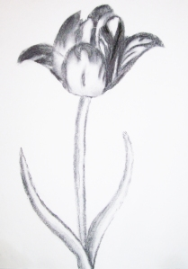 Tulip_Charcoal